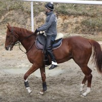 2歳愛馬の先陣 ~セドゥラマジー~
