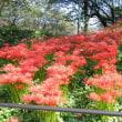 蔵王山頂の紅葉