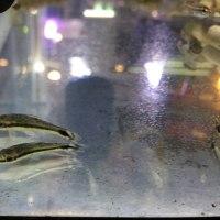 ひっそり人気な魚たち