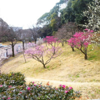 2017 万博記念公園(大阪)を歩く。