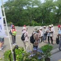 しばた紫陽花まつり船岡城址公園歴史ツアー