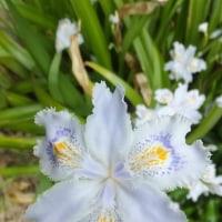 庭に咲き始めた花々