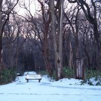 師走の野幌森林公園