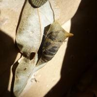 もぬけの殻