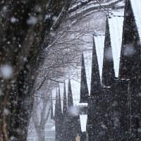 ボタ雪降る山居倉庫