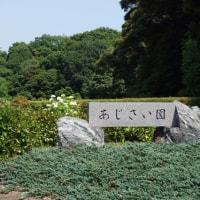 あじさいの名前のわかる40年前の思い出の公園・・・山口県山陽小野田市江汐公園