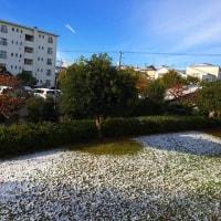 ちょっと雪が残ってます。たまプラーザ団地