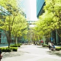 新緑の広場