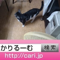 2016/09/20(18:05:47)写真 猫S