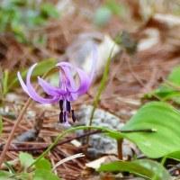 春を探しに・・・3月27日