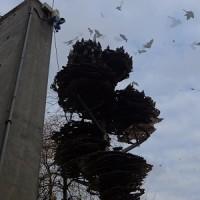ピカディリー・ガーデンズ、噴水修理工事の開始、鎮魂の樹に集うハト、壁に関して動きなし。
