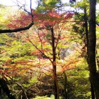 12/3 箕面大滝、お散歩ツー