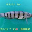 笑転爺の釣行記 7月15日☀ 長瀬・浦賀
