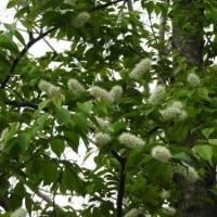水戸市植物公園の春の花(2)
