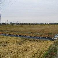 日記(10.28)畑の菊・PCクラブ