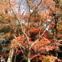 楽寿園の紅葉がまだ見頃