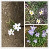 道端に咲く花達。