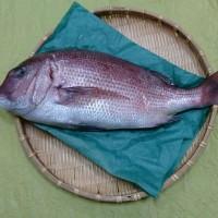 鯛のナッツマリネ