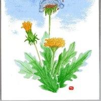 ひだまりに咲く 春の野の花