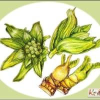 フキノトウ&タラの芽