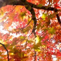 終盤を迎えた紅葉。