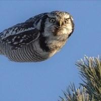 いいかジョナサン、わしらが飛ぶのは、食うためだ。そこんとこ、忘れんようにな~!?