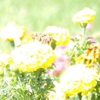 秋風を楽しむ花々!-- 2