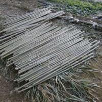 竹の乾燥、熱処理