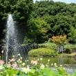 修景池の噴水と蓮で遊ぶ・郷土の森公園