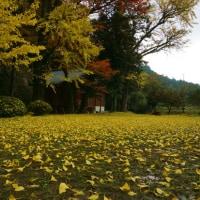 三瀬曲渕の紅葉7(ヨシ)