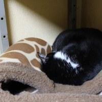 重力に負けたかまくらベッド