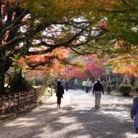 高岡・古城公園の紅葉