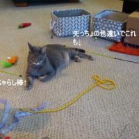 猫のおもちゃ箱&低糖質差し入れ料理