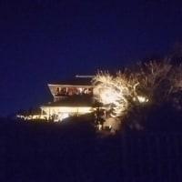 嗚呼、夜の梅