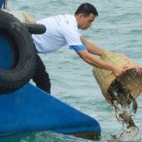 400万匹のワタリガニを放流   Phú Quốc島・ベトナム