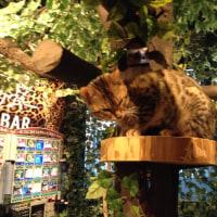 猫カフェ初体験