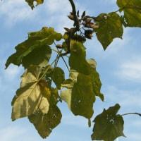 桐一葉 落ちて天下の秋を知る