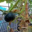 家庭菜園(投稿)
