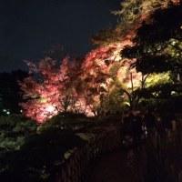 栗林公園ライトアップに行ってみた。