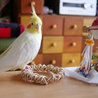 おもちゃの上で佇む☆アンニュイとんがり