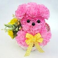 母の日に!可愛い造花のカーネーションプードル!!