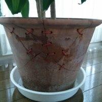 割れた植え木鉢