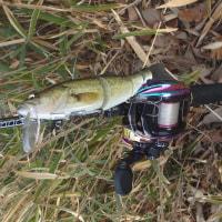本日の釣り