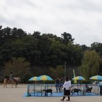 名城公園 出張動物園