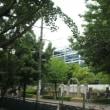 7月17日鶴舞公園テニスコート