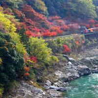 保津峡の紅葉が見頃となりました!