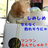 釣るネコ 釣られたネコ
