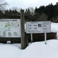 「岩手県立花きセンター」のスプレーマム(寒菊)'シューフリル'  2016年12月18日(日)