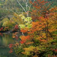 6年前の奥日光紅葉風景