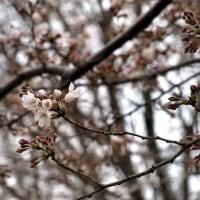 ゆるやかに春へ